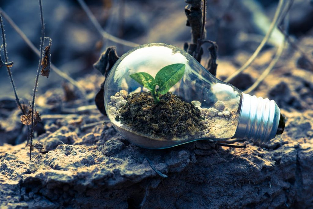 Tips for Lowering Your Electricity Bill, Clear Light Bulb Planter on Gray Rock - Free Stock Photo