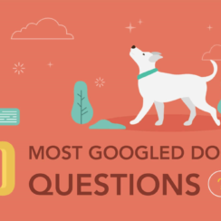 10 Most Googled Dog Questions
