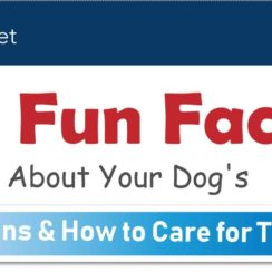 15 Fun Facts About Your Dog's Organs & How to Care for Them