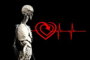 Anatomy Human Heart Pulse Frequency Heart Rate