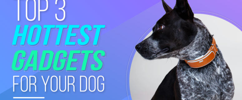 Top 3 Hottest Gadgets for Your Dog