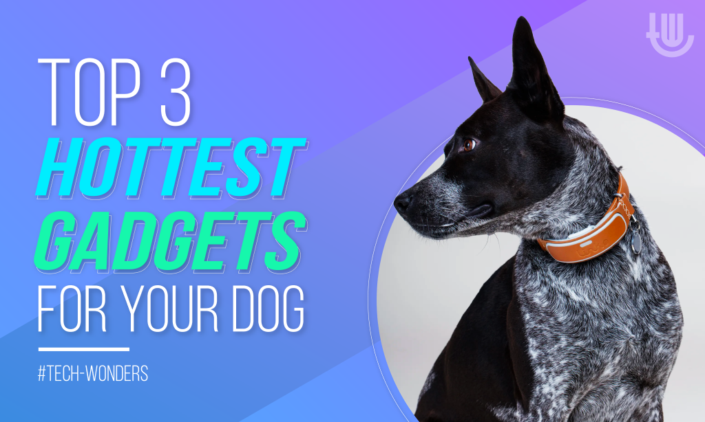 Top 3 Hottest Gadgets for Your Dog: