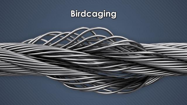 Birdcaging